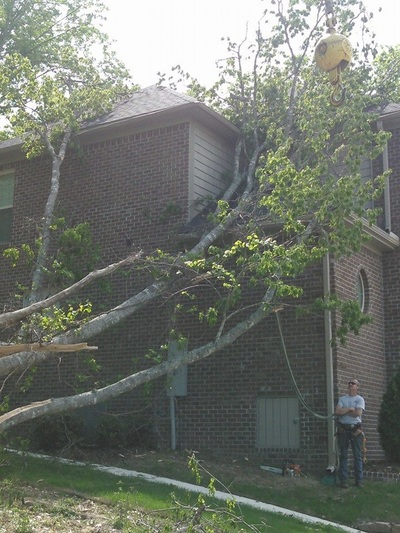 Tree Removal Service In Huntsville Al And Madison Al